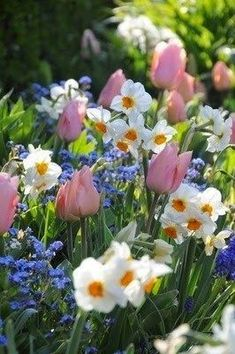 Tulips narcisses and myosotis - All About Garden Amazing Flowers, Colorful Flowers, Spring Flowers, Pastel Colors, Flowers Perennials, Planting Flowers, Flowers Garden, Flowers Nature, Flower Gardening