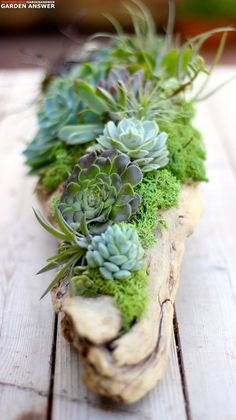 Succulents, air plants, moss, and driftwood. Love it! www.youtube.com/gardenanswer www.facebook.com/gardenanswer