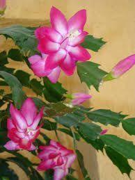 flores do mês de julho - Pesquisa Google