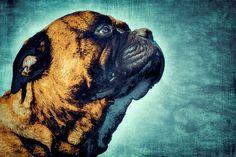 Nieuw in mijn Werk aan de Muur shop: Lief en stoere hond