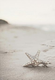 Pearl-studded silver starfish. Cancer