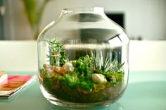 Image via  Tiny Red Poppy Woodland Terrarium in Brandy Glass   Image via  Break a favorite wine glass stem? Place remains in a potted plant, add a votive and light! Momma D's latest up cycle