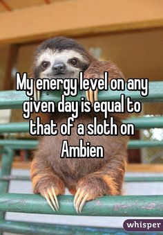 sloth on ambien - Google Search