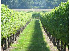 Newport Vineyards! #VisitRhodeIsland