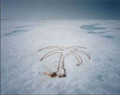 Hooft Graafland, Scarlett: Photography, Deco | The Red List