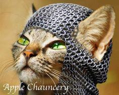 Che gatto regalare al vostro amico grafico? Ogni gatto è un font e ogni font è un gatto.  #puppy #graphic #animals