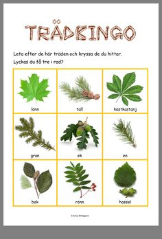 Nature Hunt Bingo - A super fun outdoor game for kids that encourages exploration of the world around them! Educational Activities For Kids, Nature Activities, Preschool Activities, Outdoor Activities, Bingo, Kids Barn, Learn Swedish, Nature Hunt, Swedish Language
