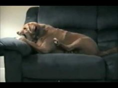 Funny Dog Attacks His Own Paw