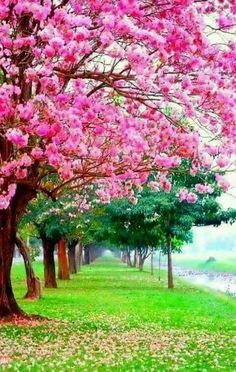 My yard will be all flowering trees Beautiful Nature Wallpaper, Beautiful Landscapes, Beautiful Gardens, Beautiful Flowers, Beautiful Places, Natur Wallpaper, Landscape Photography, Nature Photography, Colorful Trees