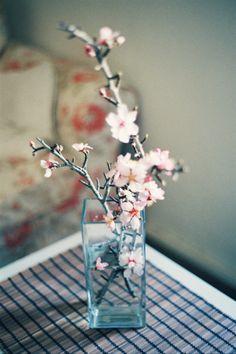 桜を家に持ち込むとは新しい