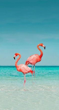 iPhone and Android Wallpapers: Flamingo Wallpaper for iPhone and Android Wallpaper , iPhone and Android Wallpapers: Flamingo Wallpaper for iPhone and Android iPhone and Android Wallpapers: Flamingo Wallpaper for iPhone an. Flamingo Wallpaper, Ocean Wallpaper, Tropical Wallpaper, Flamingo Art, Summer Wallpaper, Cute Wallpaper Backgrounds, Pretty Wallpapers, Animal Wallpaper, Aesthetic Iphone Wallpaper