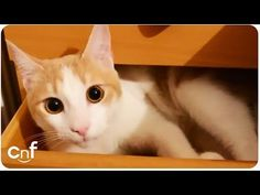 This is Why We Love Our Cats - We Love Cats and Kittens