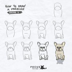 How to draw a Frenchie, French Bulldog illustration, French Bulldog Drawing, Corgi Drawing, French Bulldog Puppies, French Bulldogs, Frenchie Puppies, Baby Bulldogs, Corgi Puppies, English Bulldogs, Easy Drawings