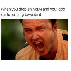 NOOOOOOO!   Via @thegrilledchez  __________________________ #dogsofinstagram #doggo #dogsofig #dogowner #dogperson #hungrydog #baddog #pupper #aaronpaul