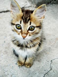 A kitten with glowing, green eyes sitting on the pavement.
