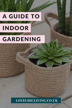 Here's everything you need to know about indoor gardening and house plant care! Whether you're looking for care guides for low light houseplants, the best home decor for houseplant aesthetic or how to start an indoor garden; this post has you covered! #lovechicdecor Indoor Greenhouse, Indoor Gardening, Indoor Plants, Fresh Fruits And Vegetables, Healthy Vegetables, Best Grow Lights, Green Lettuce, Growing Plants Indoors, House Plant Care