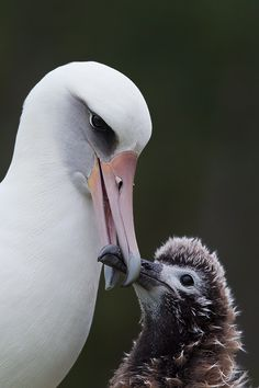 """When mamma says """"hush little baby"""", she is quite serious_ as demonstrated here."""