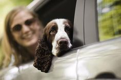 If your dog hides under the bed instead of running for the door at the first mention of a ride in the car, chances are he has a phobia. A fear of riding in the car is very common in dogs. Learn why your dog is afraid of the car, and what you can do to get him comfortable with going for a ride.