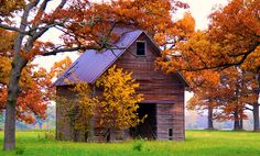 old barn in autumn.  This looks like the barn that used to be on our farm !! :)