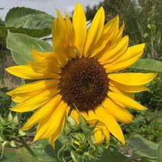 Balade à l'arche de la nature #fleur #flower #nature #naturelovers #botanic #botanique #biodiversite