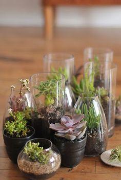 succulent terrariums for favors