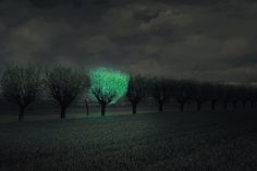 Scientists are making glow-in-the-dark trees to replace street lights.