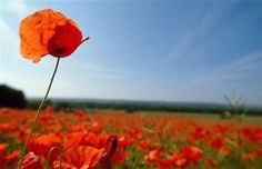 'They shall grow not old, as we that are left grow old:  Age shall not weary them, nor the years condemn.  At the going down of the sun and in the morning,  We will remember them.'  Laurence Binyon