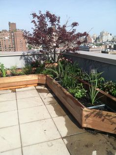 mahogany  and    insulated    sheet metal planters/  drip  irrigation  on    PH