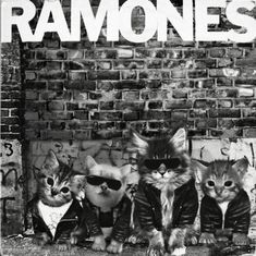 The Ramones were some real cool cats. Ramones, Famous Album Covers, Classic Album Covers, Crazy Cat Lady, Crazy Cats, I Love Cats, Cool Cats, The Big Theory, Classic Rock Albums