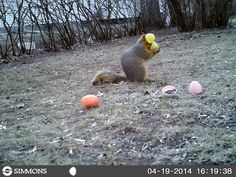 Funny animal pictures caught by trail cameras : theCHIVE