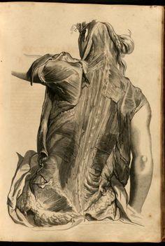Anatomia humani corporis,Govard Bidloo Illustrations by Gerard de Lairesse