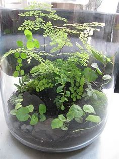 terrarium tabletop ferns