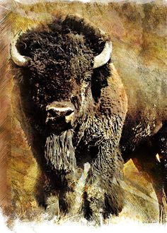 Buffalo Poster - William Martin  #buffalo #art