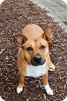 Meet Bridgette! She is a mid sized dog who is super friendly. She'd be best suited in a home without kids, but does well with other dogs. She is well mannered with a moderate energy level.