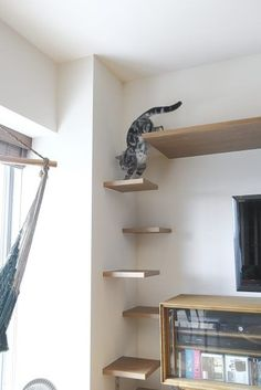 Cat shelves Source by missmahala Diy Cat Shelves, Cat Climbing Wall, Cat Habitat, Muebles Home, Cat Wall Furniture, Cat Stairs, Diy Cat Tree, Cat Towers, Cat Playground