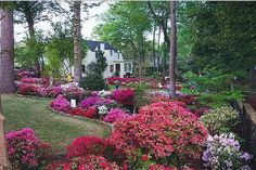 River Oaks Garden Club Azalea Trail....This is Houston in the Spring.