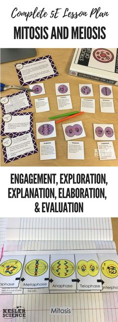Mitosis and Meiosis 5E Lesson Plan ready to print and teach the entire biology unit. Includes word wall of vocabulary, interactive science notebook template, presentation and note worksheet, and student choice final project. Complete station lab activity is also included where students will read, research, watch, explore, illustrate, organize, write, and be assessed. Grades 5th 6th 7th 8th 9th