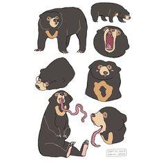 """hamotzi: """" the lovely sun bears """" dude have u seen bear's tongues ? Cute Animal Drawings, Animal Sketches, Cool Drawings, Art Sketches, Pretty Art, Cute Art, Creature Drawings, Desenho Tattoo, Bear Art"""