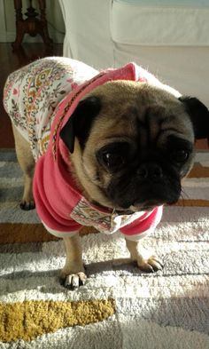 #pugchat so sad to say farewell I've had a blast thanks @HamiltonPug you're the best I love you all my gorgy friends