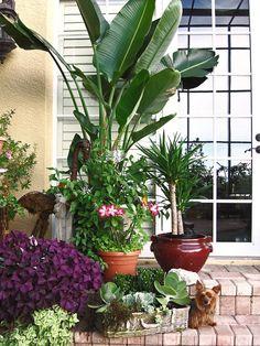 How to Decorate a Lanai decorating a lanai in florida KatGs Florida Paradise 2009 One of Florida Landscaping, Florida Gardening, Tropical Landscaping, Tropical Garden, Tropical Plants, Backyard Landscaping, Lanai Decorating, Florida Decorating, Decorating Ideas