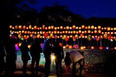 Descanso Gardens } - RISE of the Jack O'Lanterns