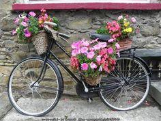 The Old Irish Bicycle   Irish American Mom