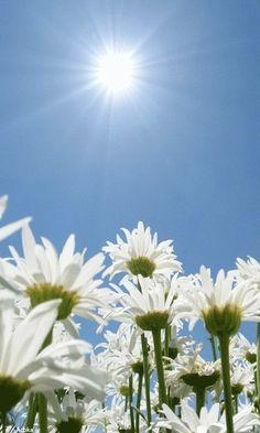 Анимация цветы - Солнце и ромашки