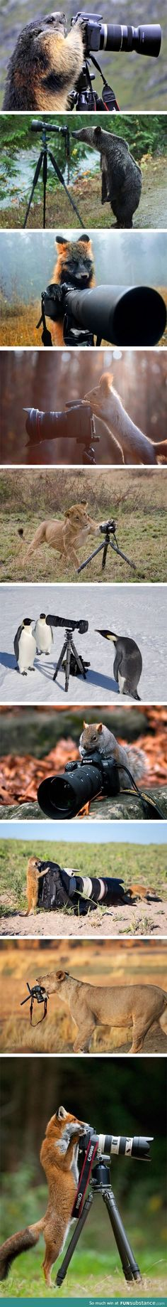 Animal photographers
