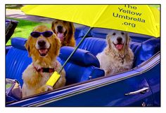 "The Goldens support ""The Yellow Umbrella.org/ My Chloe, Riley & Bailey!!"