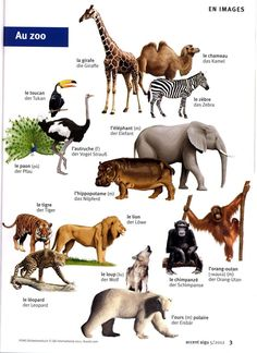 Zoo 2, Le Zoo, Wild Animals List, Motif Jungle, Learn To Speak French, French Grammar, French Classroom, French Words, French Lessons