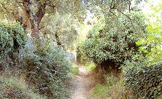 Camino de almonaster