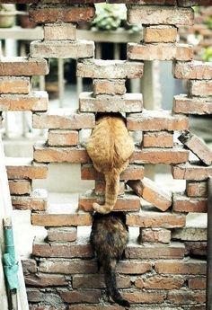 Only cats.