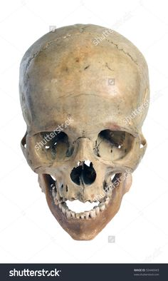 Skull Of The Person Close-Up On A White Background. Стоковые фотографии 55446943 : Shutterstock