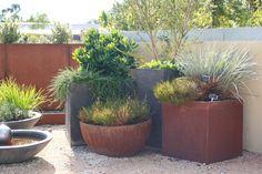 Natives in Pots Cranbourne Botanical Garden